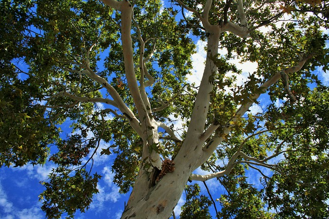Trees That You Should Never Plant In Your Yard