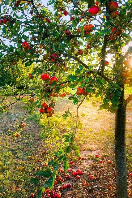 Delicious Fruit Trees