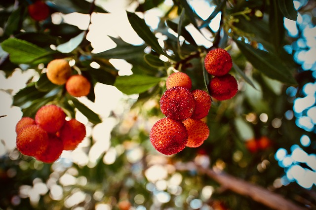 Best Trees To Grow In San Francisco