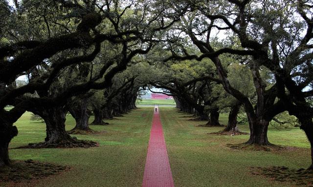Best Trees For Sidewalks