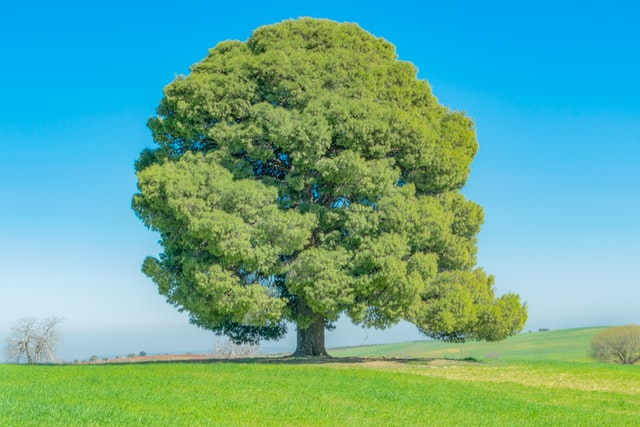 Which Trees Require The Least Water?