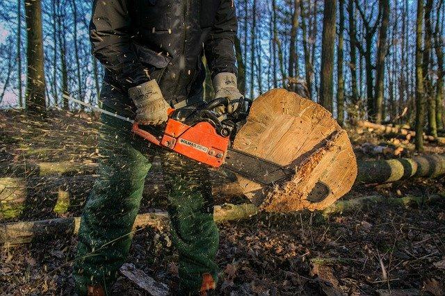 cut down big tree