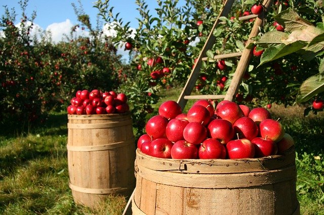 Tips For Selecting Fruit Trees