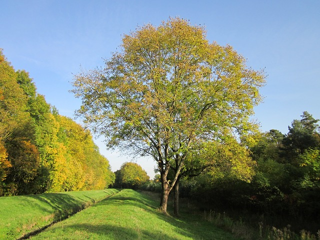 Common Tree Planting Mistakes