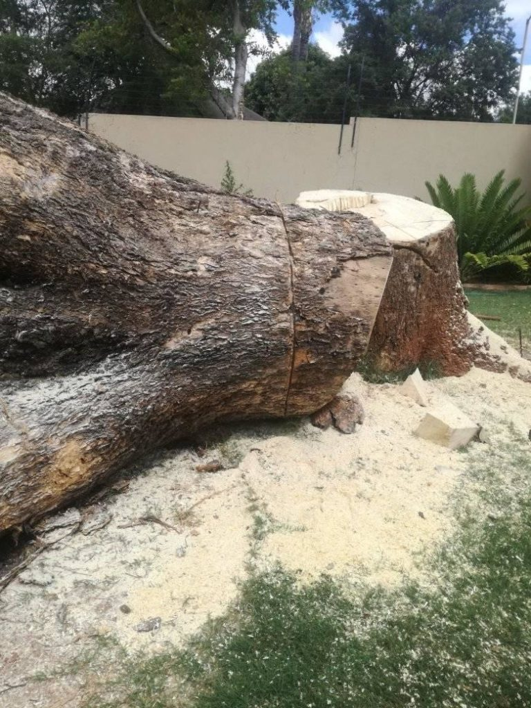 Stump removal and grinding Daly City CA
