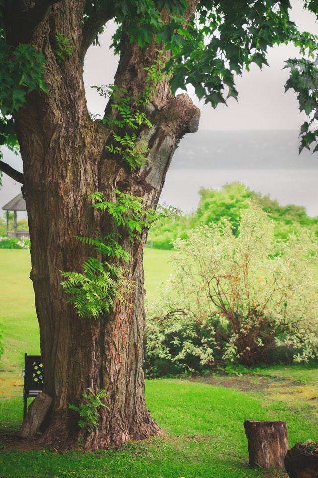 Pacifica Tree Service