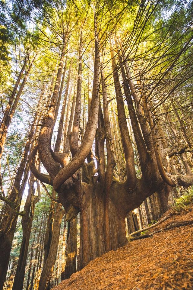 Daly City Tree Service – San Francisco Peninsula